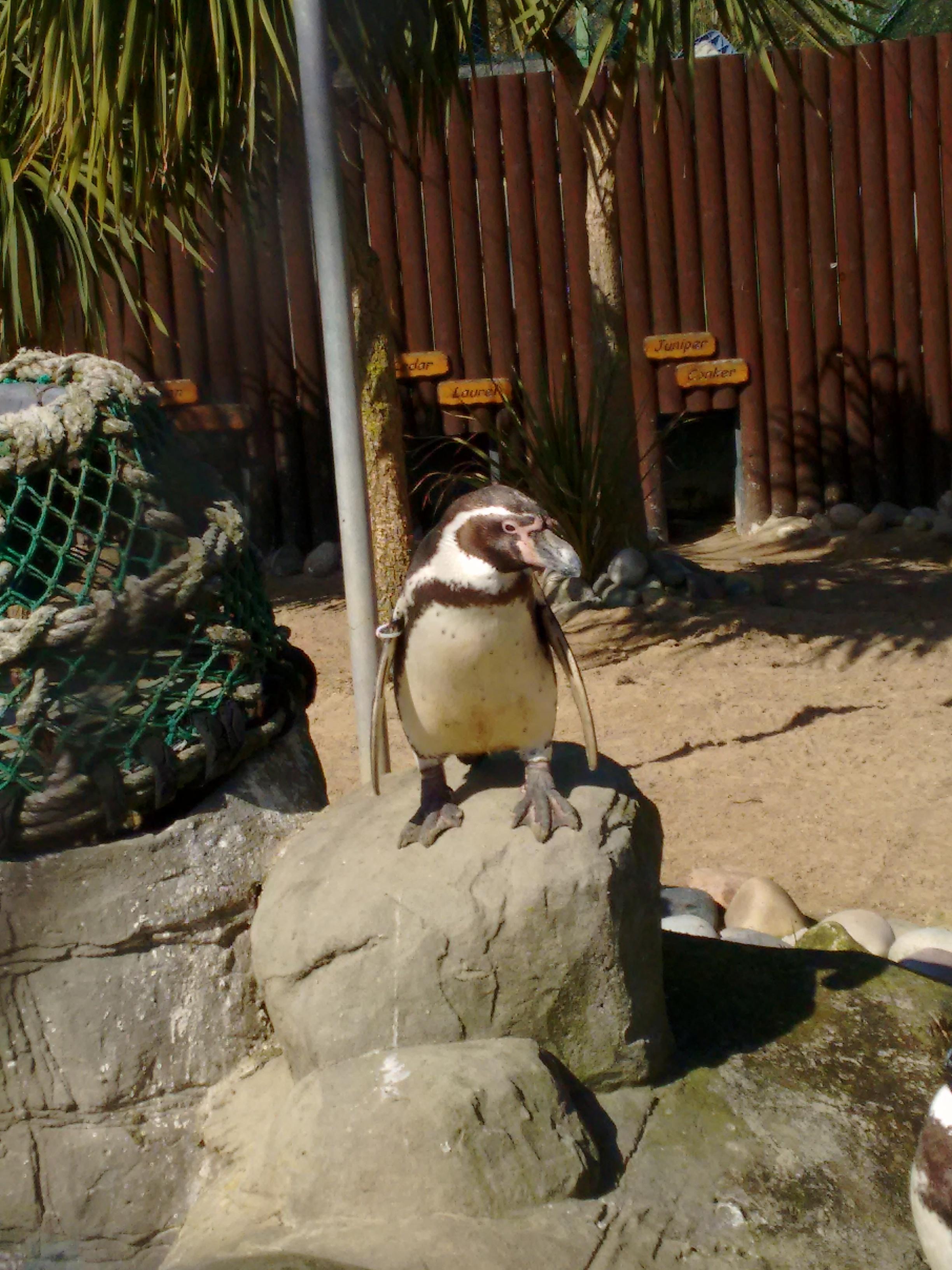 Sea Life Adventure Park - Penguin - Weymouth